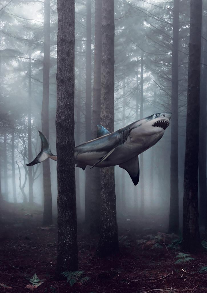 JackCrossing_Shark (1)