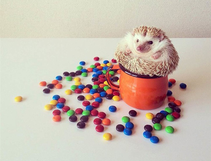 darcy_hedgehog_0