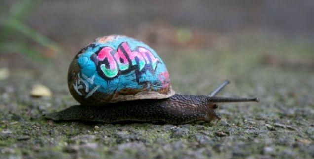 snail_art_7