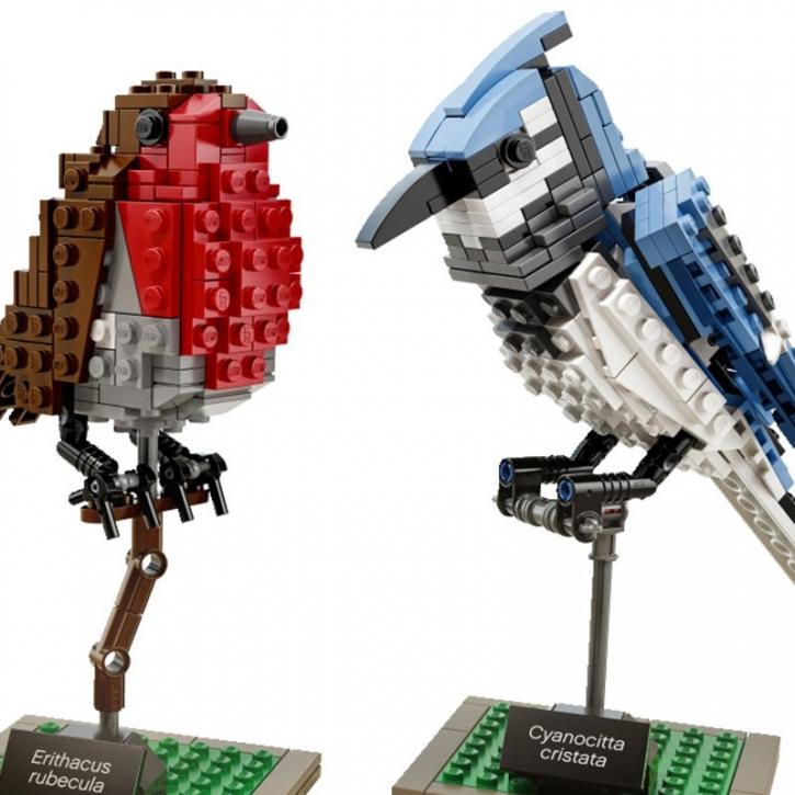 birdies_2