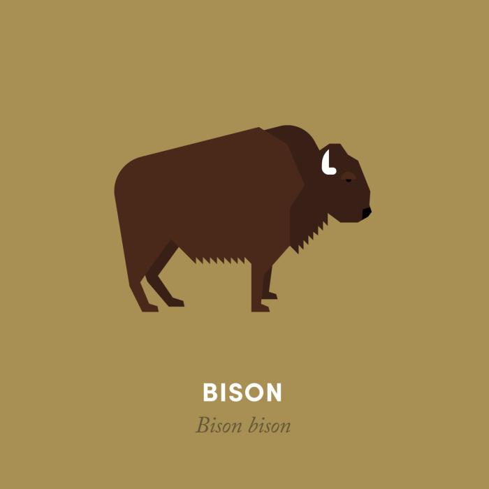 1-bison