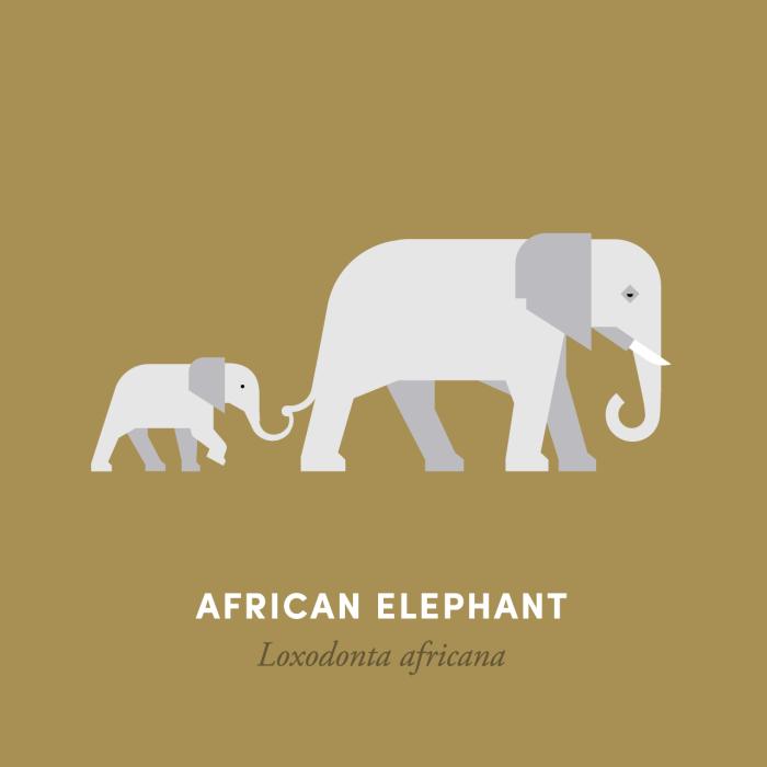 10-elephant