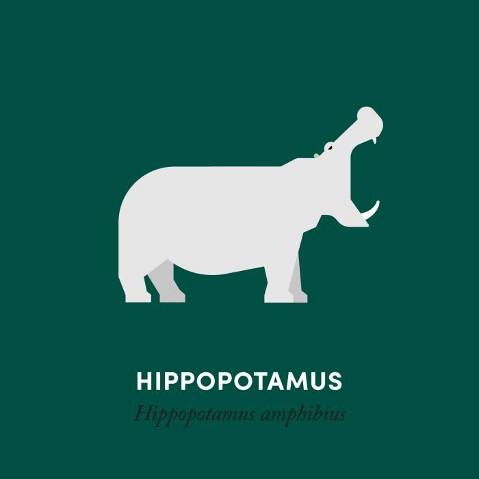 8-hippo-02