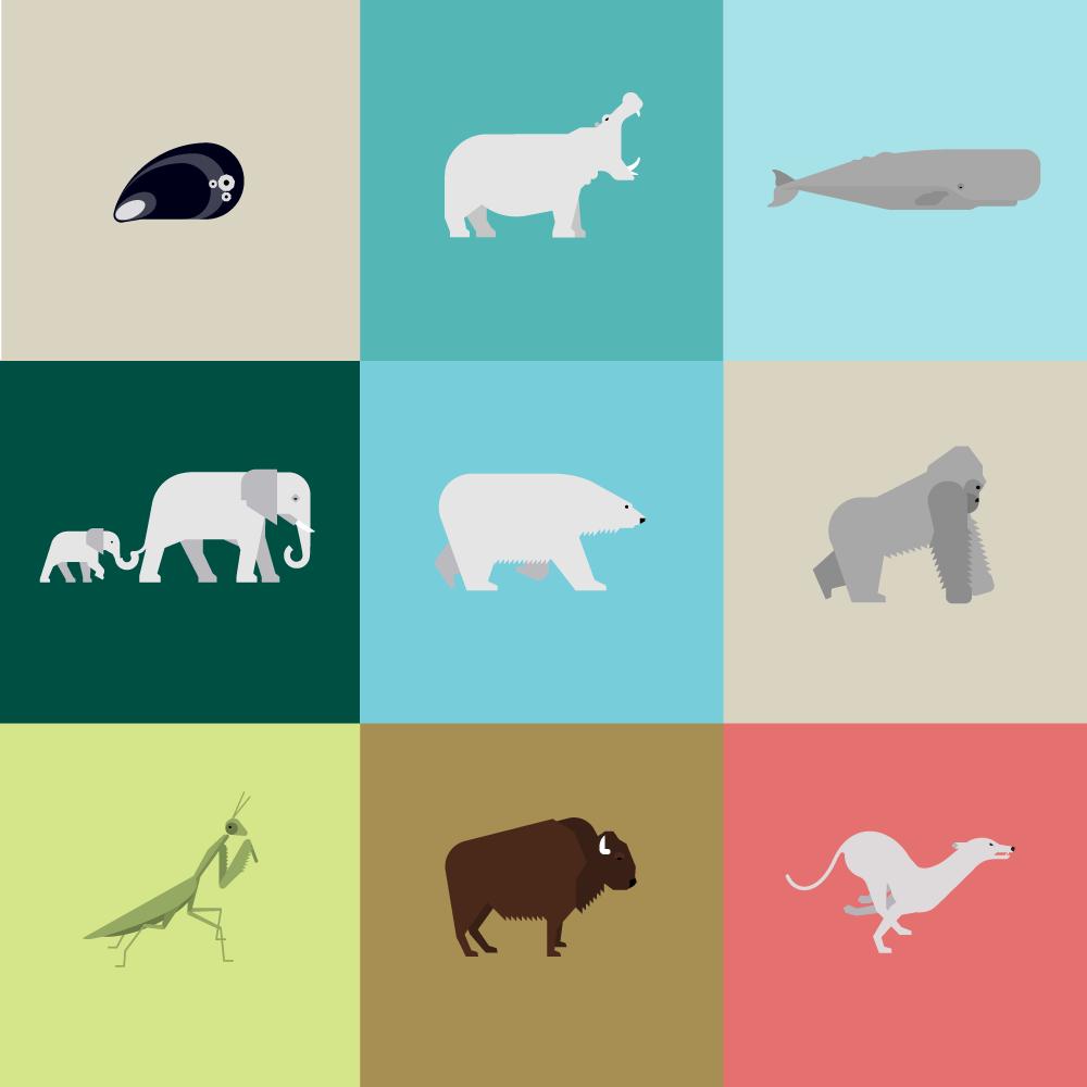 Animalia-kickoff