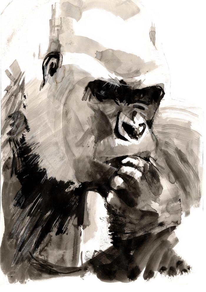 gorilla_900