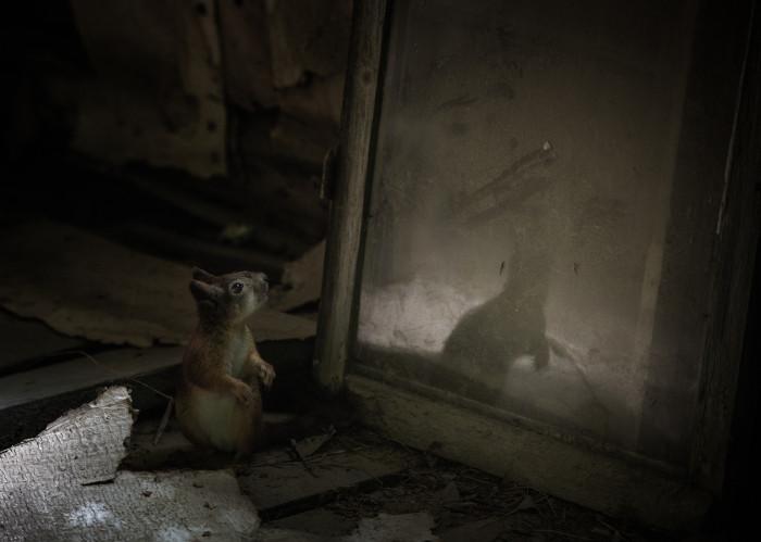 Squirrel (Sciurus vulgarius) Hide, Nikon D3s + 70-200/2.8 Salo, Finland