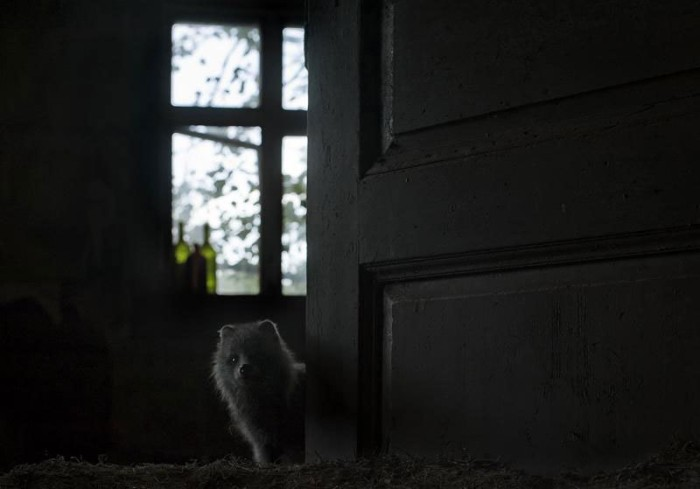 abandoned-house-in-finland-overtaken-by-animals-kai-fagerstrom-8