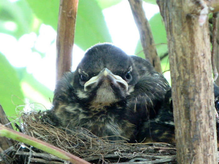 actual-real-life-angry-looking-birds-1