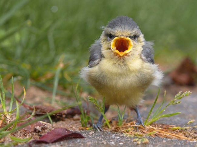 actual-real-life-angry-looking-birds-4