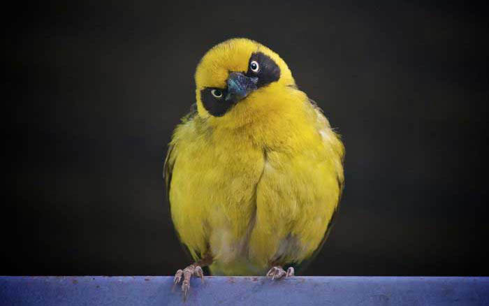 actual-real-life-angry-looking-birds-6