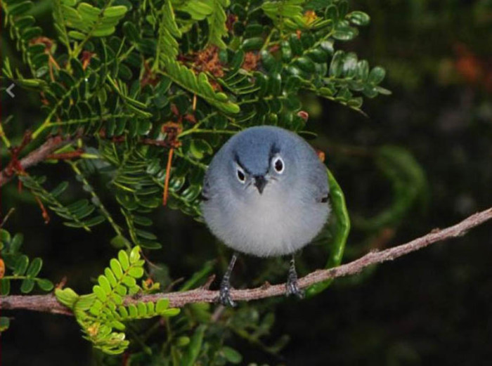 real-life-angry-bird