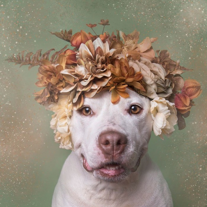 """pit bulls are not dangerous Pit bulls are not inherently dangerous like any other dogs, they can become violent,  28 comments on """"5 reasons why pit bulls are misunderstood."""
